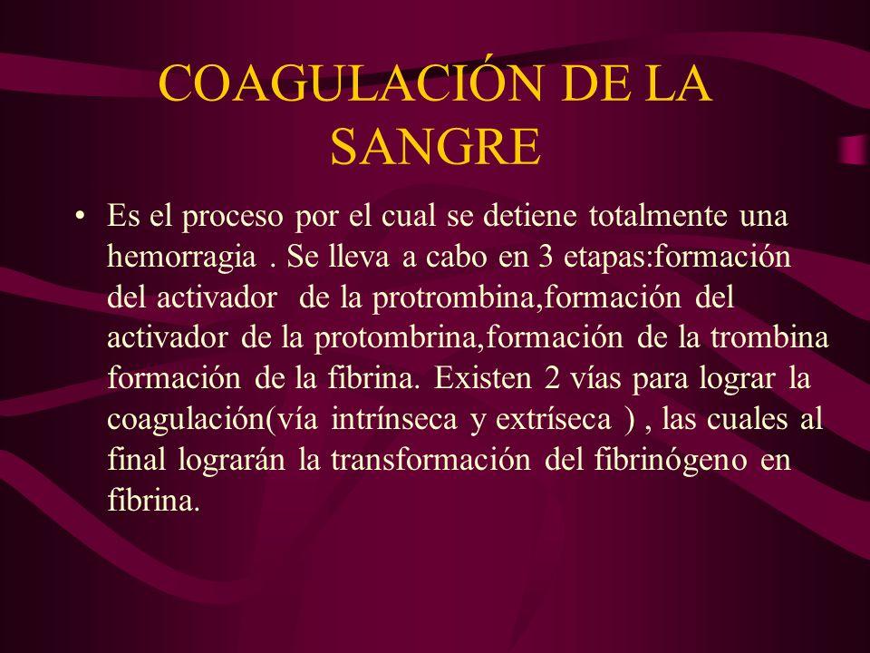 COAGULACIÓN DE LA SANGRE Es el proceso por el cual se detiene totalmente una hemorragia. Se lleva a cabo en 3 etapas:formación del activador de la pro