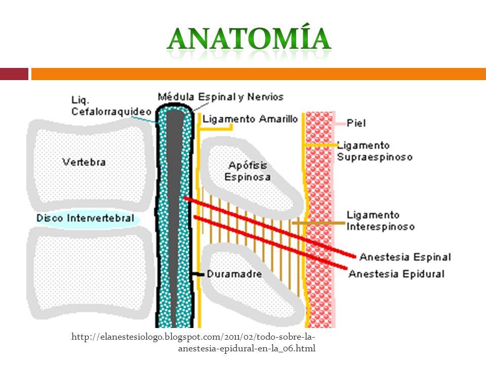 http://elanestesiologo.blogspot.com/2011/02/todo-sobre-la- anestesia-epidural-en-la_06.html