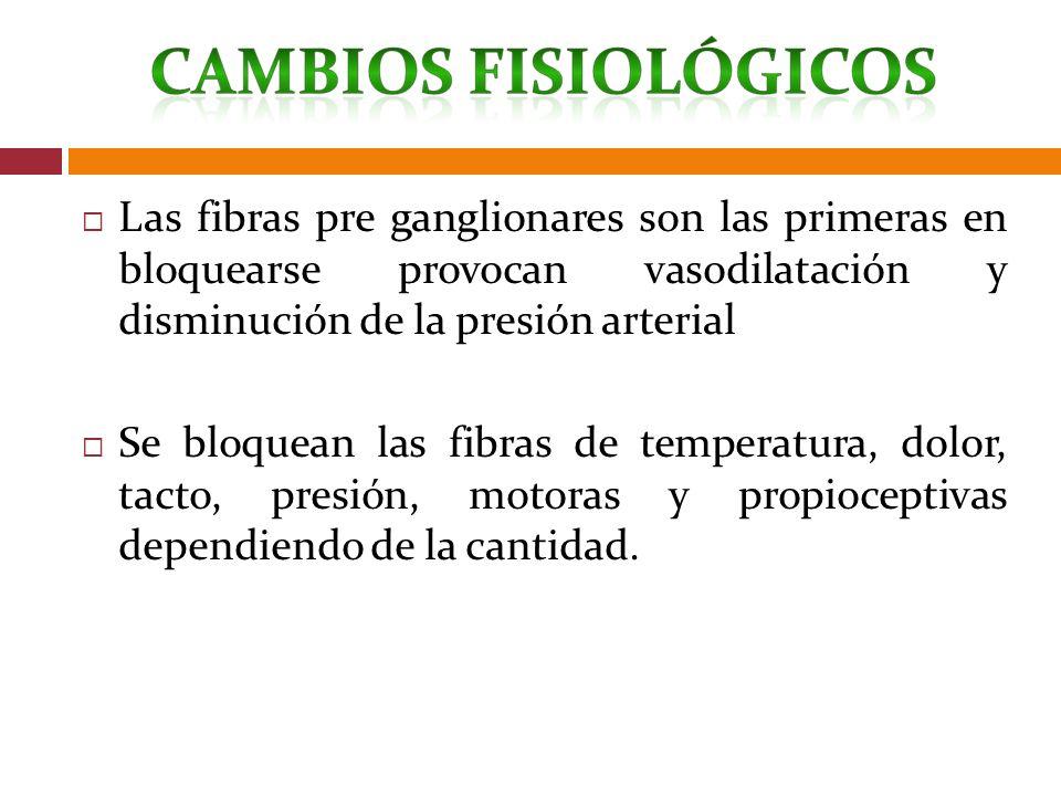 Las fibras pre ganglionares son las primeras en bloquearse provocan vasodilatación y disminución de la presión arterial Se bloquean las fibras de temp