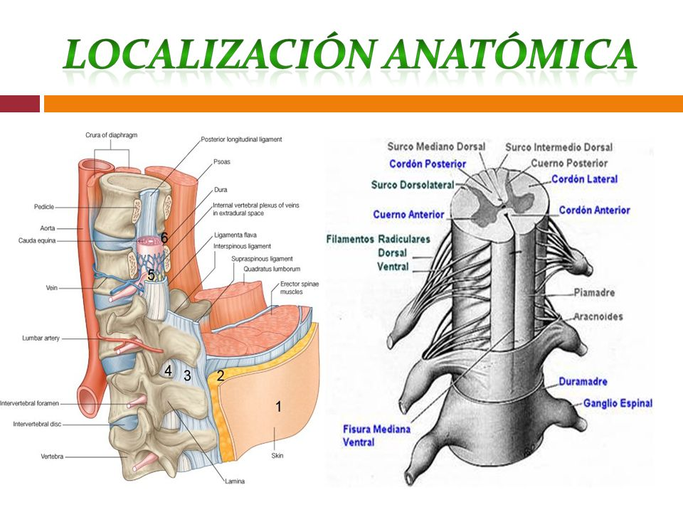 Riesgo de lesión postural dominio 11: seguridad /protección clase 2: Lesión física Definición: Riesgo de cambios anatómicos y físicos accidentales como consecuencia de la postura o equipo durante un procedimiento quirúrgico/invasivo factores de riegos - Desorientación -Edema -Debilidad muscular - inmovilización -alteración sensitivo-perceptuales