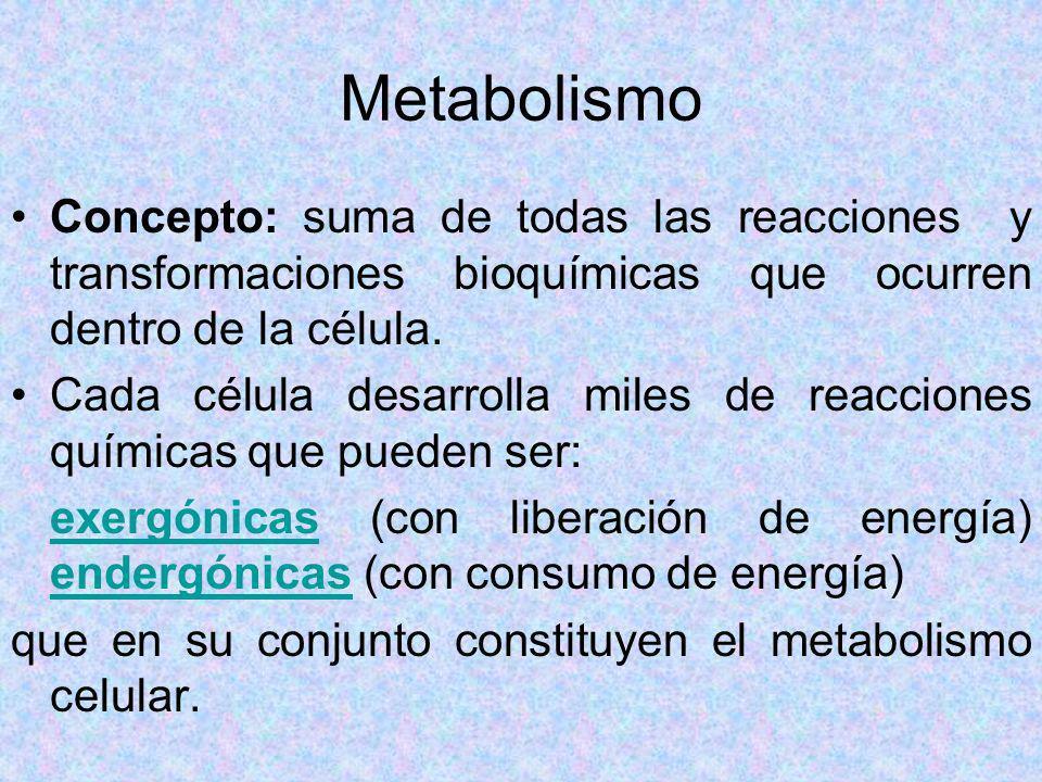 Metabolismo Concepto: suma de todas las reacciones y transformaciones bioquímicas que ocurren dentro de la célula. Cada célula desarrolla miles de rea