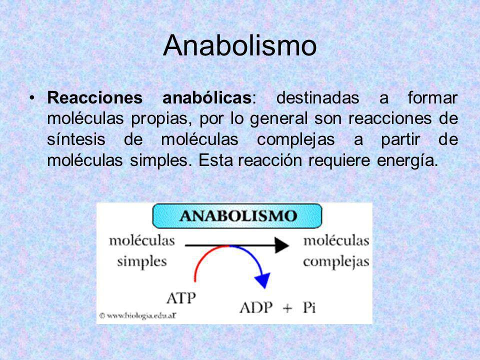 Anabolismo Reacciones anabólicas: destinadas a formar moléculas propias, por lo general son reacciones de síntesis de moléculas complejas a partir de