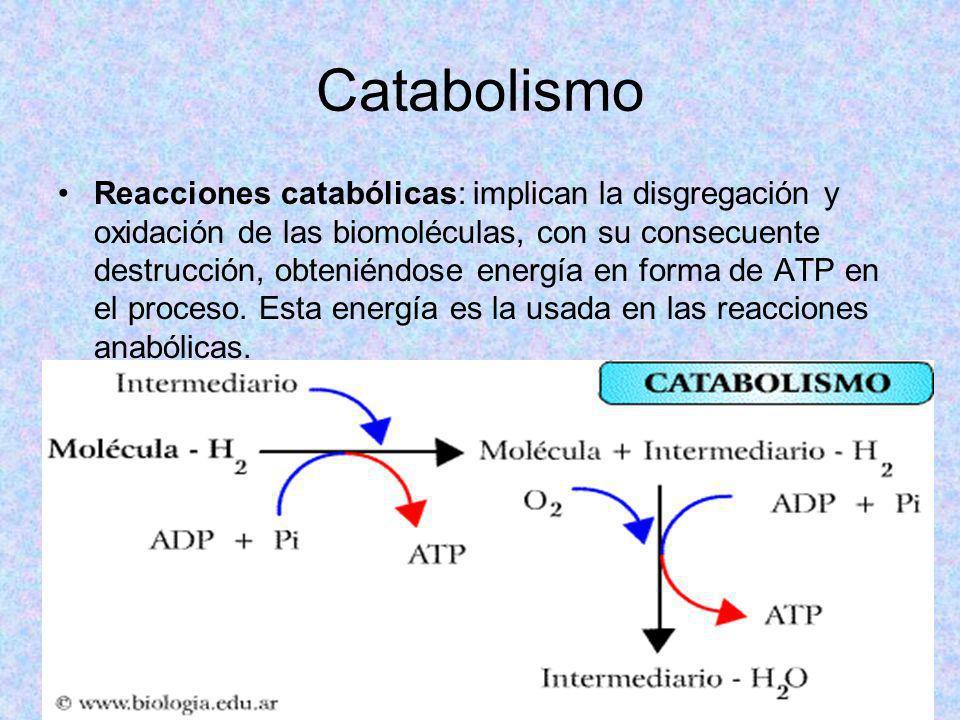 Catabolismo Reacciones catabólicas: implican la disgregación y oxidación de las biomoléculas, con su consecuente destrucción, obteniéndose energía en