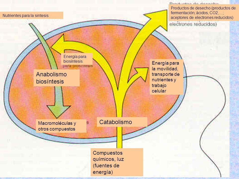 Nutrientes para la sintesis Productos de desecho (productos de fermentación; ácidos, CO2,…; aceptores de electrones reducidos) Compuestos químicos, lu