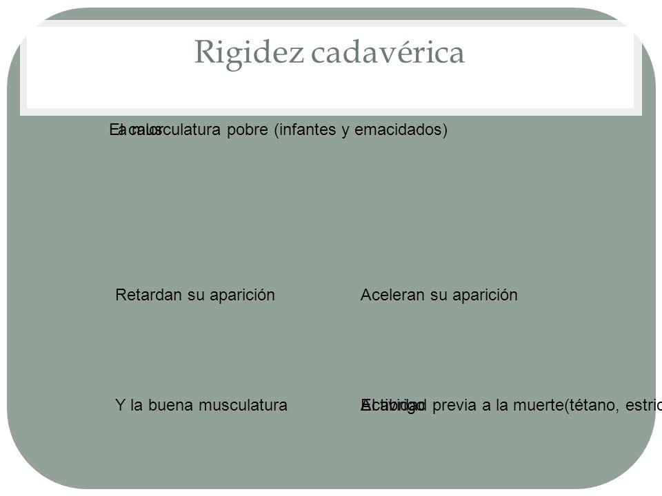 Rigidez cadavérica Retardan su aparición Y la buena musculaturaEl abrigo Aceleran su aparición El calorLa musculatura pobre (infantes y emacidados) Ac