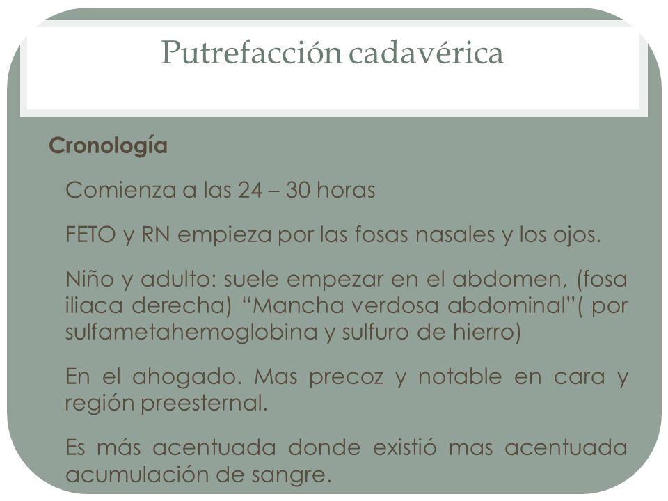 Putrefacción cadavérica Cronología Comienza a las 24 – 30 horas FETO y RN empieza por las fosas nasales y los ojos. Niño y adulto: suele empezar en el