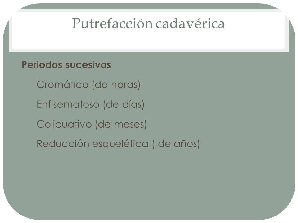 Putrefacción cadavérica Periodos sucesivos 1. Cromático (de horas) 2. Enfisematoso (de días) 3. Colicuativo (de meses) 4. Reducción esquelética ( de a
