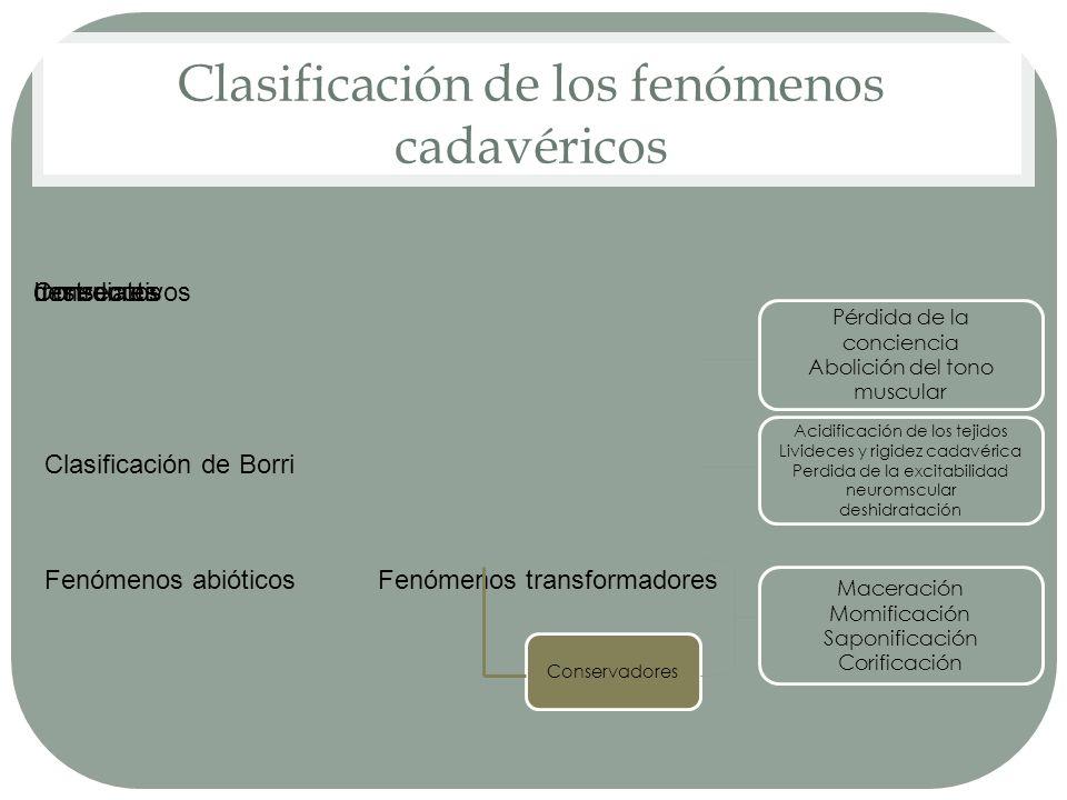 Clasificación de los fenómenos cadavéricos Clasificación de Borri Fenómenos abióticos InmediatosConsecutivos Fenómenos transformadores destruores Pérd