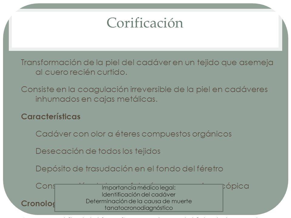 Corificación Transformación de la piel del cadáver en un tejido que asemeja al cuero recién curtido. Consiste en la coagulación irreversible de la pie