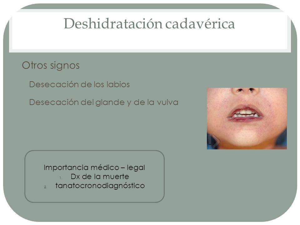 Deshidratación cadavérica Otros signos Desecación de los labios Desecación del glande y de la vulva Importancia médico – legal 1. Dx de la muerte 2. t