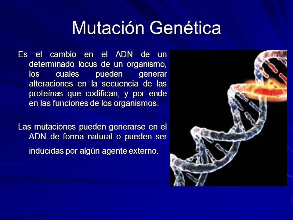 Mutación Genética Es el cambio en el ADN de un determinado locus de un organismo, los cuales pueden generar alteraciones en la secuencia de las proteí