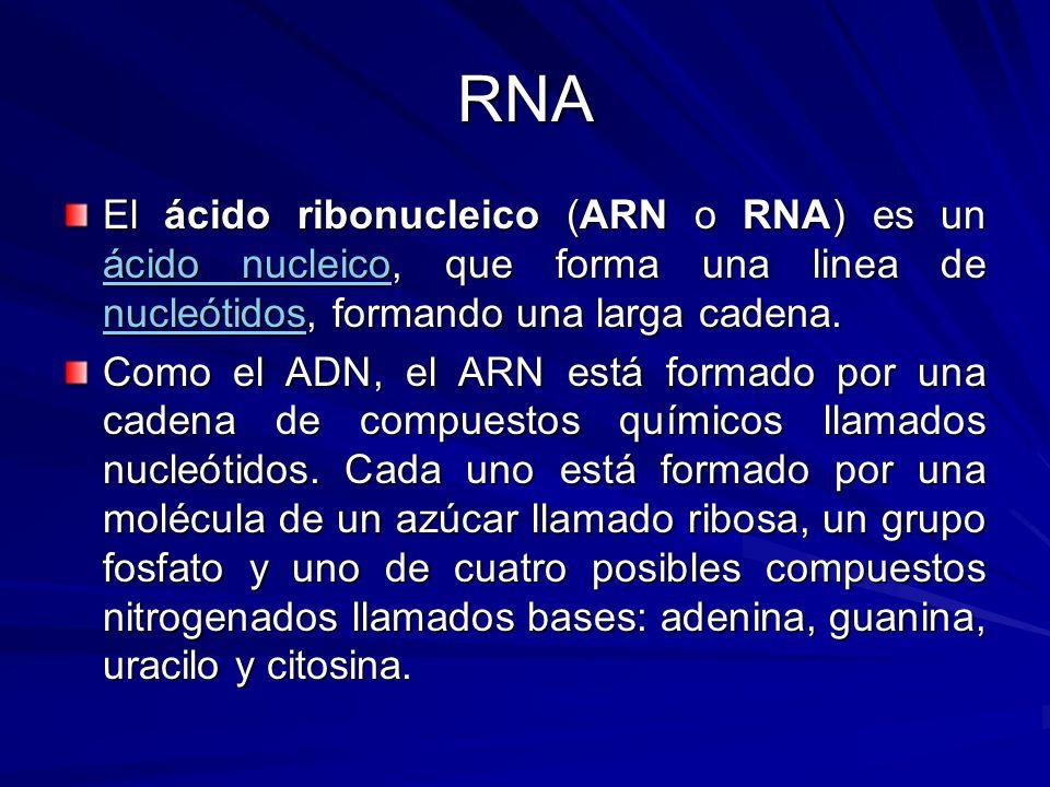 RNA El ácido ribonucleico (ARN o RNA) es un ácido nucleico, que forma una linea de nucleótidos, formando una larga cadena. ácido nucleico nucleótidos