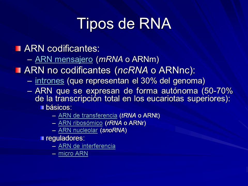 Tipos de RNA ARN codificantes: –ARN mensajero (mRNA o ARNm) ARN mensajeroARN mensajero ARN no codificantes (ncRNA o ARNnc): –intrones (que representan