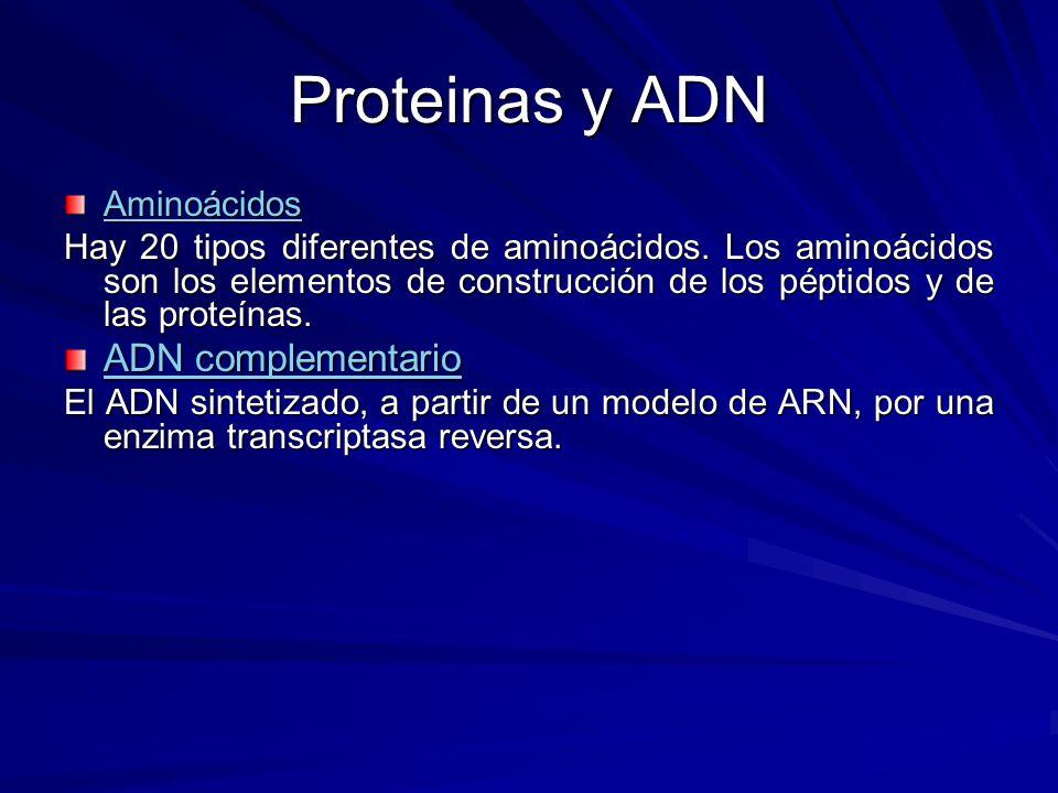Proteinas y ADN Aminoácidos Hay 20 tipos diferentes de aminoácidos. Los aminoácidos son los elementos de construcción de los péptidos y de las proteín
