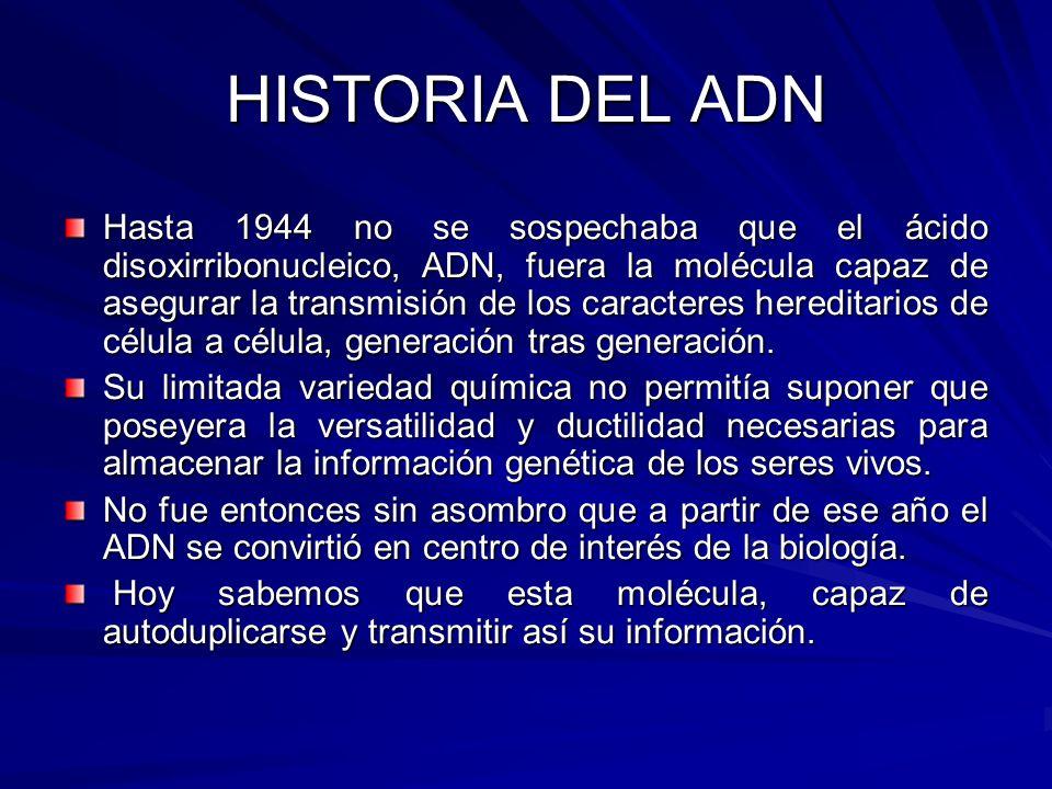 Hasta 1944 no se sospechaba que el ácido disoxirribonucleico, ADN, fuera la molécula capaz de asegurar la transmisión de los caracteres hereditarios d