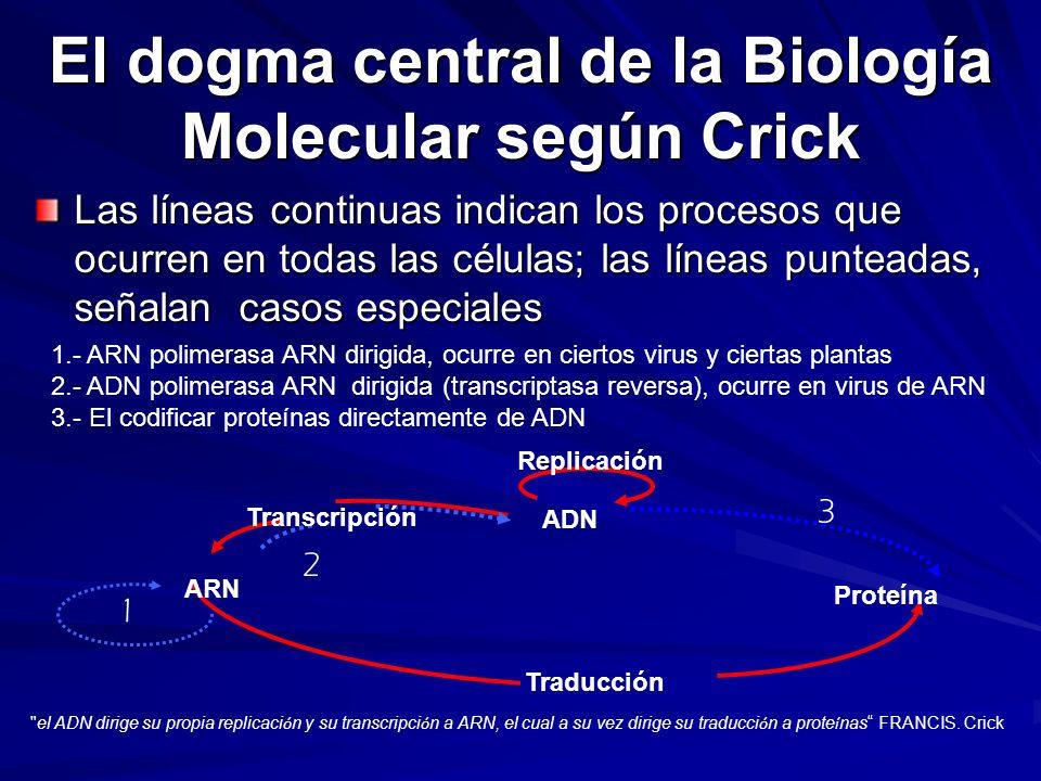 El dogma central de la Biología Molecular según Crick Las líneas continuas indican los procesos que ocurren en todas las células; las líneas punteadas