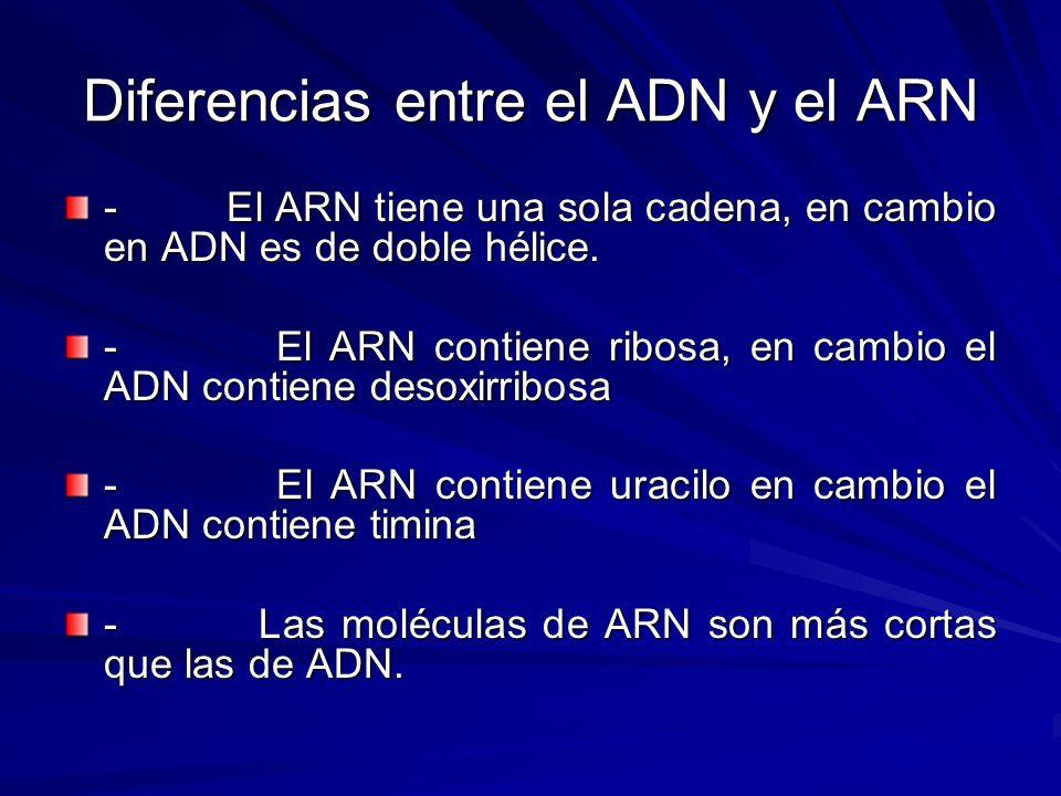 Diferencias entre el ADN y el ARN - El ARN tiene una sola cadena, en cambio en ADN es de doble hélice. - El ARN contiene ribosa, en cambio el ADN cont