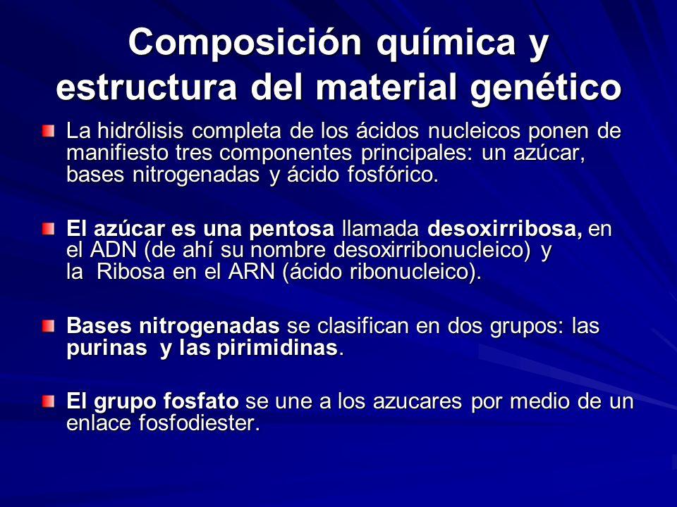 Composición química y estructura del material genético La hidrólisis completa de los ácidos nucleicos ponen de manifiesto tres componentes principales