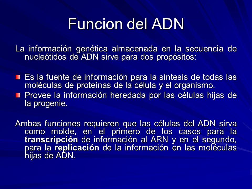 Funcion del ADN La información genética almacenada en la secuencia de nucleótidos de ADN sirve para dos propósitos: Es la fuente de información para l