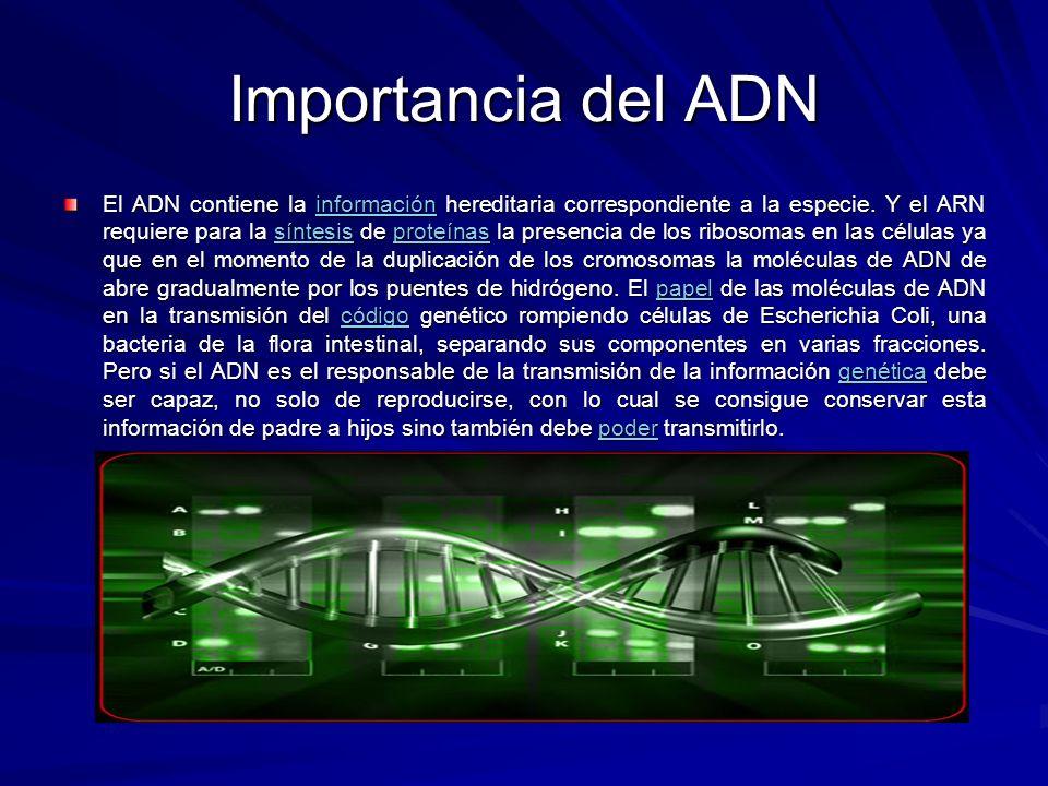 Importancia del ADN El ADN contiene la información hereditaria correspondiente a la especie. Y el ARN requiere para la síntesis de proteínas la presen