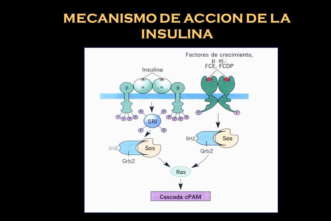 10 BIOQUIMICO. FACTOR SOLUBLE. INTERACCION CELULA - CELULA INTERACCION CELULA - M.E.C. BIOFISICO. FUERZAS BIOMECANICAS TEMPERATURA PRESION ATMOSFERICA