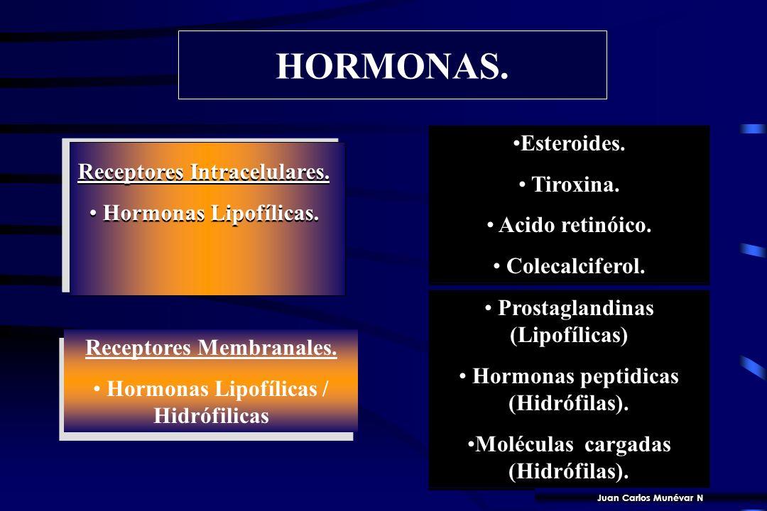 12 HIDROFÍLICAS: se unen a receptores de superficie. HIDROFÓBA: tienen como ligandos Receptores intracelulares.