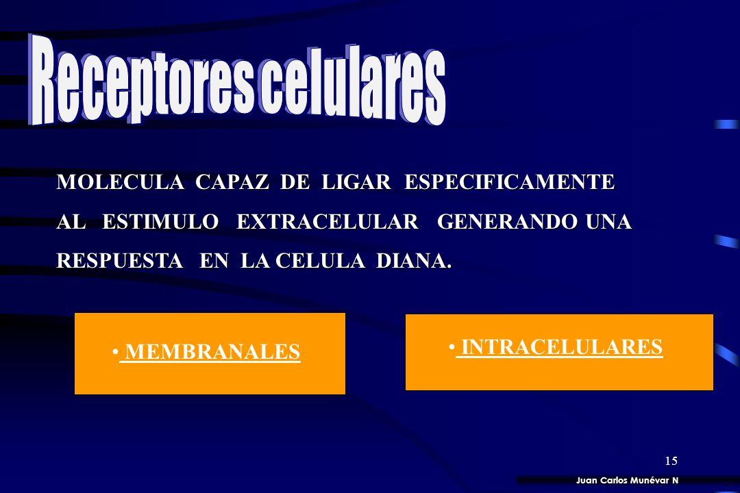14 SINTESIS, LIBERACION Y DEGRADACION DE HORMONAS.
