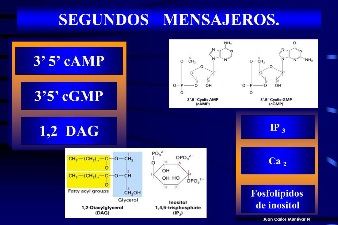 27 MOLECULAS DE SEÑALIZACION INTRACELULAR Nucleótidos cíclicos o productos de hidrólisis lipídica sintetizados por ciclasas o fosfolipasas asociadas a