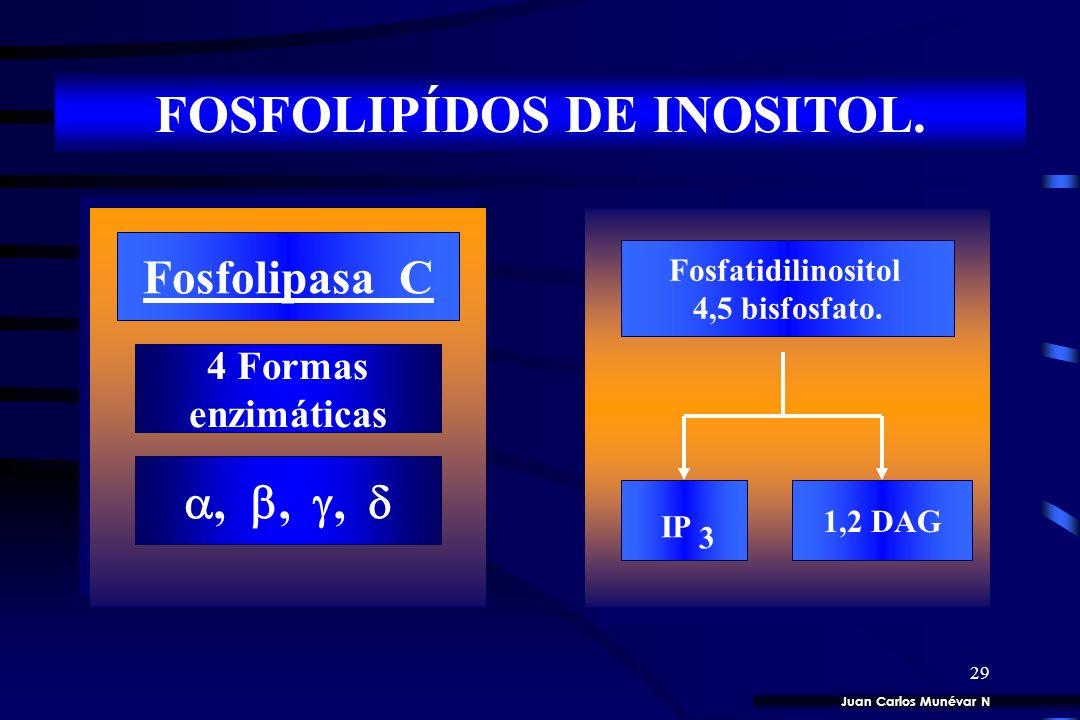 28 SEGUNDOS MENSAJEROS. 35 cGMP 1,2 DAG 3 5 cAMP IP 3 Ca 2 Fosfolípidos de inositol Juan Carlos Munévar N