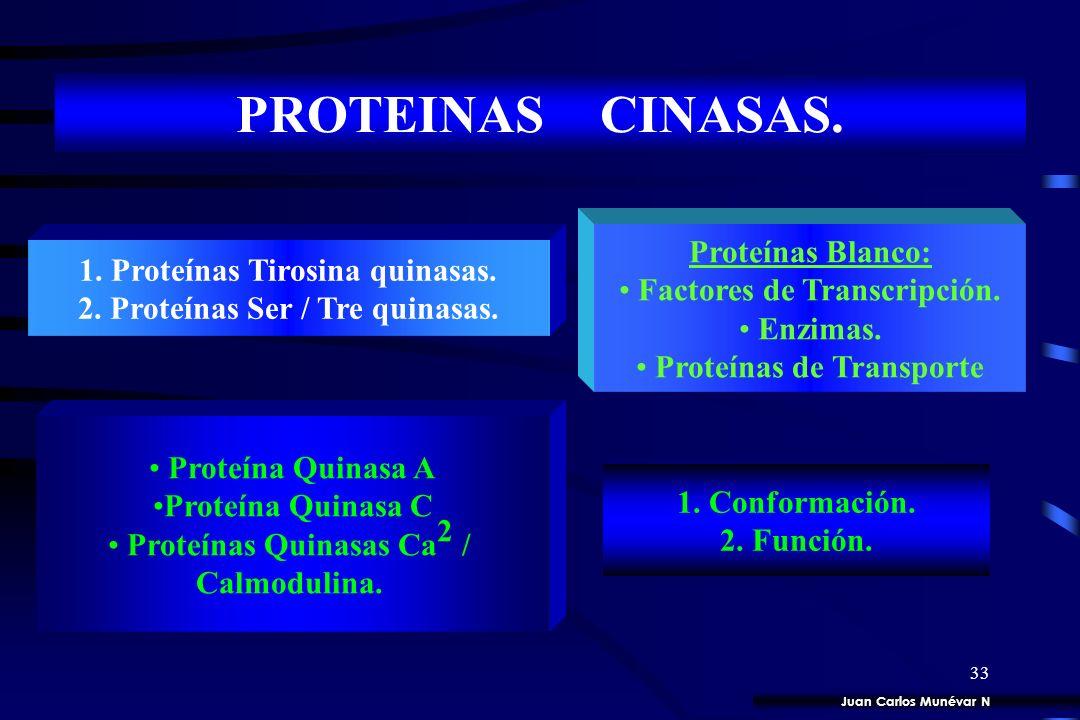 32 ADENILATO CICLASA. Complejo Ligando / Rc Proteína G s Adenil ciclasa c AMP Proteína Quinasa A PDE AMP Juan Carlos Munévar N