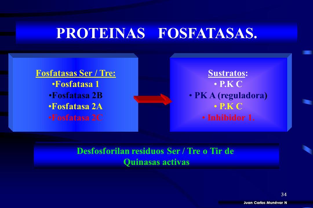 33 PROTEINAS CINASAS. Proteínas Blanco: Factores de Transcripción. Enzimas. Proteínas de Transporte 1. Proteínas Tirosina quinasas. 2. Proteínas Ser /