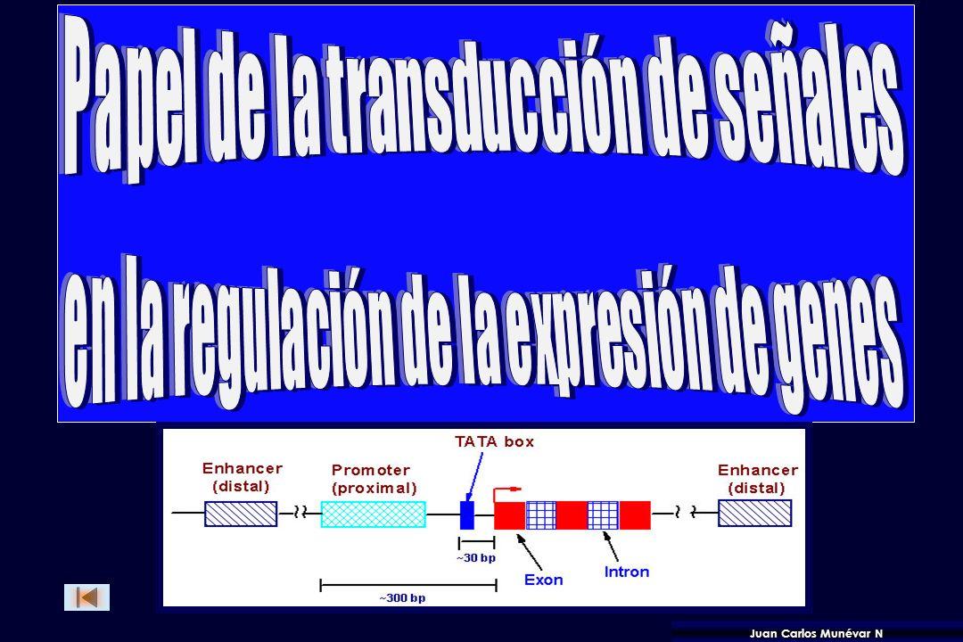 Proceso de señalización: Síntesis y liberación del Estímulo Reconocimiento del Estímulo por el Receptor. Difusión de la señal a través del plasmalema.