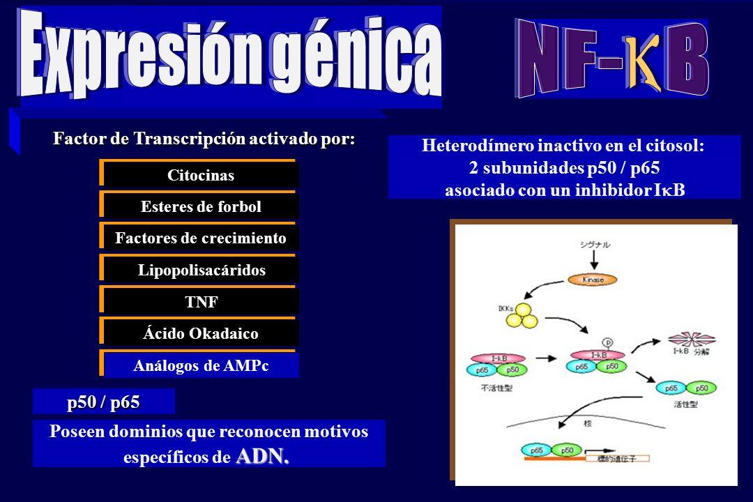 38 REGULACION DE LA EXPRESION DE GENES. Juan Carlos Munévar N 1.Estructura de la cromatina 2.Inicio de la transcripción 3.Procesamiento y modificación