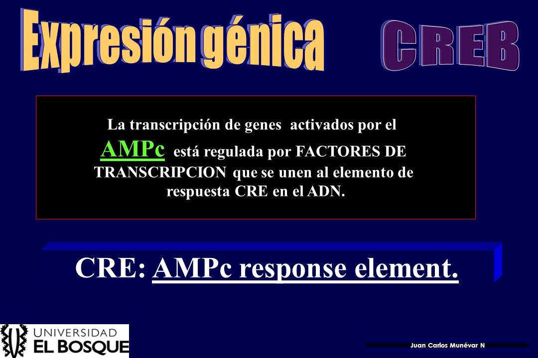 41 Genes con motivo B IL-6 GM-CSF Interferón Regula: Expresión de citocinas Proliferación celular Diferenciación celular Respuesta inflamatoria Respue