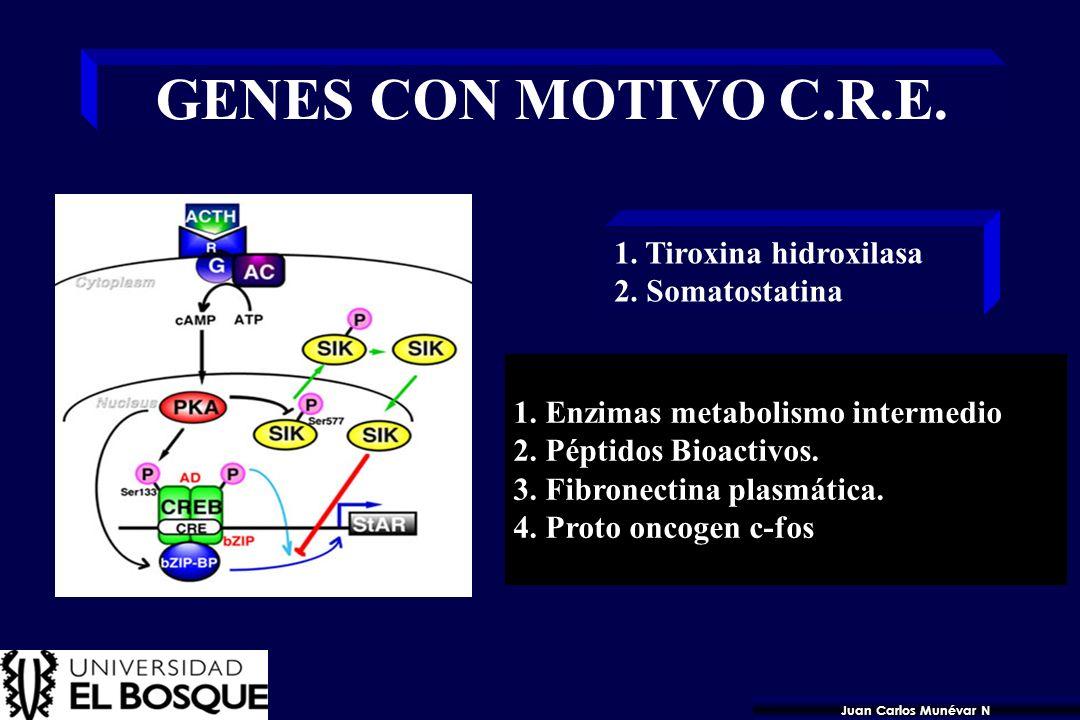 42 La transcripción de genes activados por el AMPc está regulada por FACTORES DE TRANSCRIPCION que se unen al elemento de respuesta CRE en el ADN. CRE