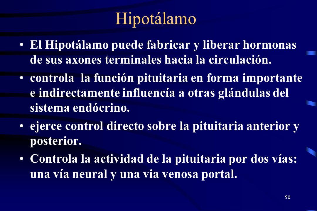 49 Hipotalamo y Pituitaria La Pituitaria tiene conexiones directas neurales y sanguíneas con el hipotálamo El Hipotálamo envia factores liberadores a