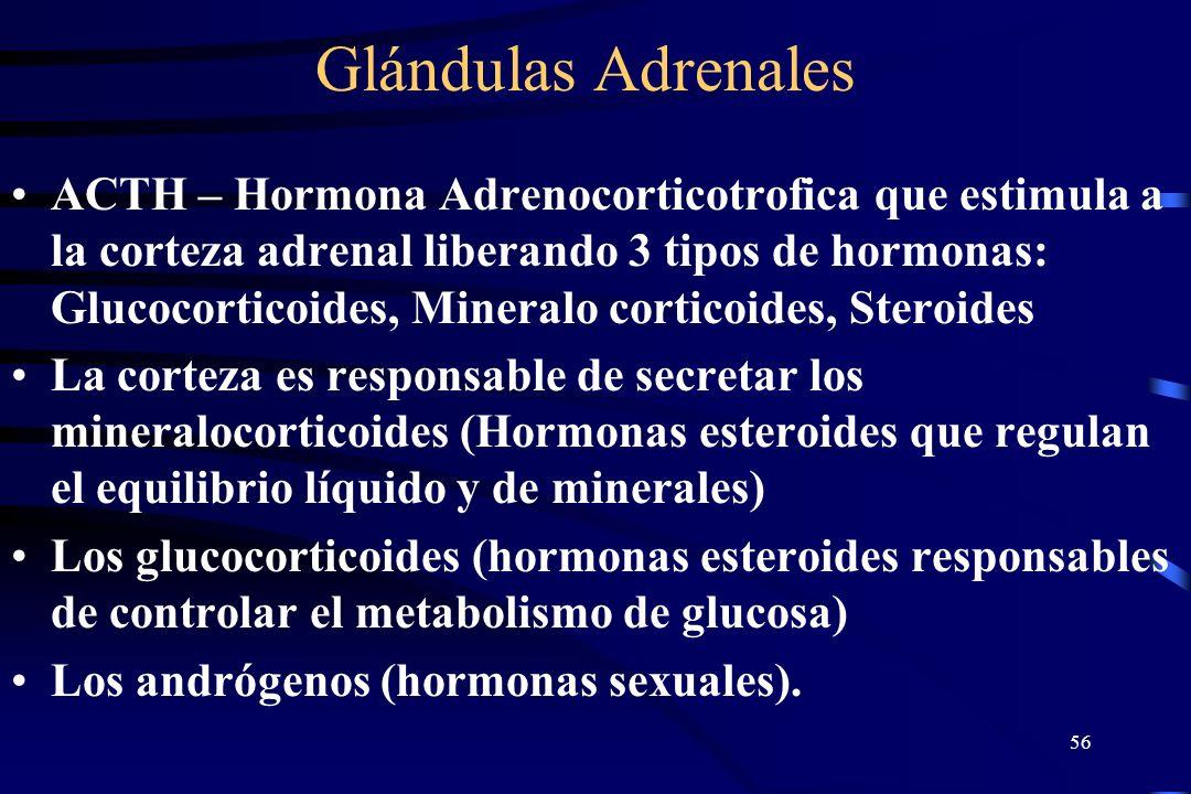 55 Glándulas Adrenales Las Glándulas Adrenergicas tienen una corteza externa y una porción interna medular. La corteza adrenal y la medula son factore