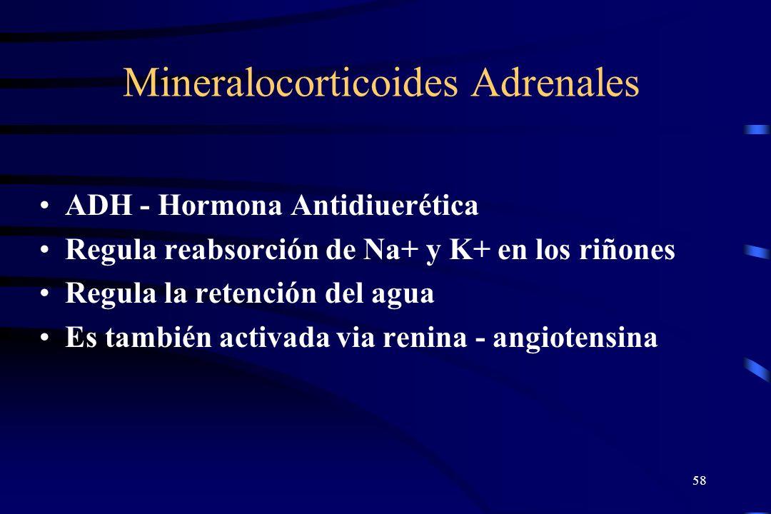 57 Glándulas Adrenales La médula adrenal se deriva de tejido neural y secreta Epinefrina y Norepinefrina La Epinefrina circula y actúa sobre el sistem