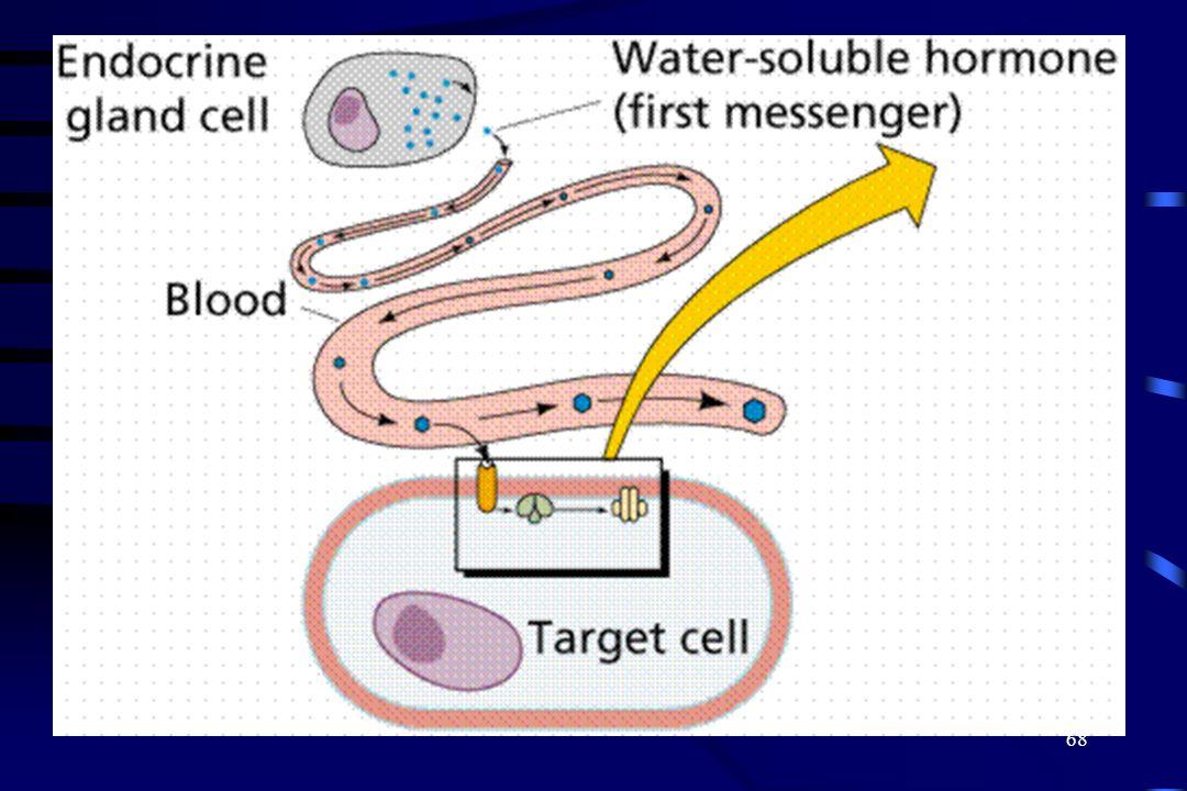 67 Mensajeros secundarios Los mensajeros secundarios inician una serie de reacciones Activa la adenilato ciclaza, genera cAMP a partir del ATP El cAMP