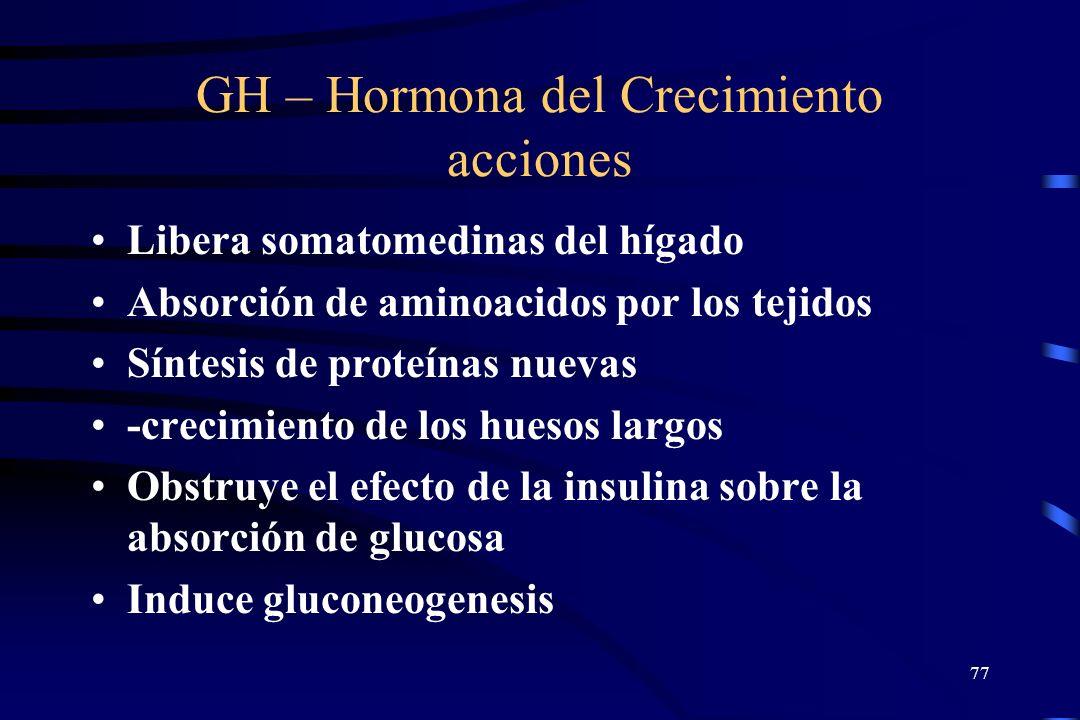 76 Glucagon Secretado en respuesta a: niveles bajos de glucosa en sangre; aumento de nivel de aminoácidos; o estimulation por hormona de crecimiento S