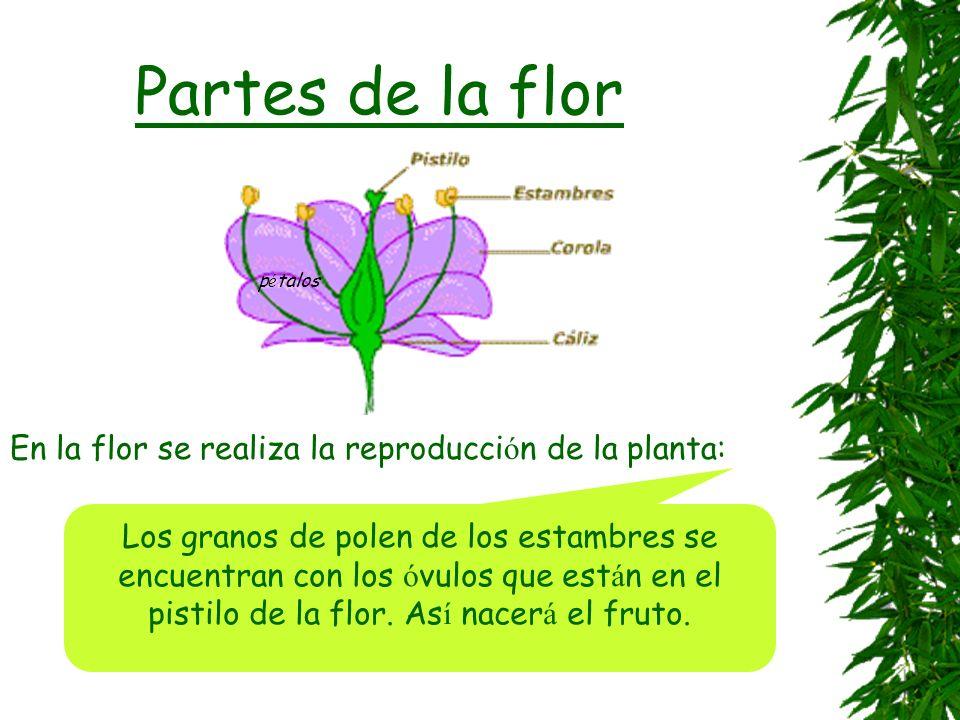 Las flores Hay miles y miles de flores diferentes, variadas, multicolores... tulipanes campanillas magnolias amapola orqu í dea petunias rosa crisante