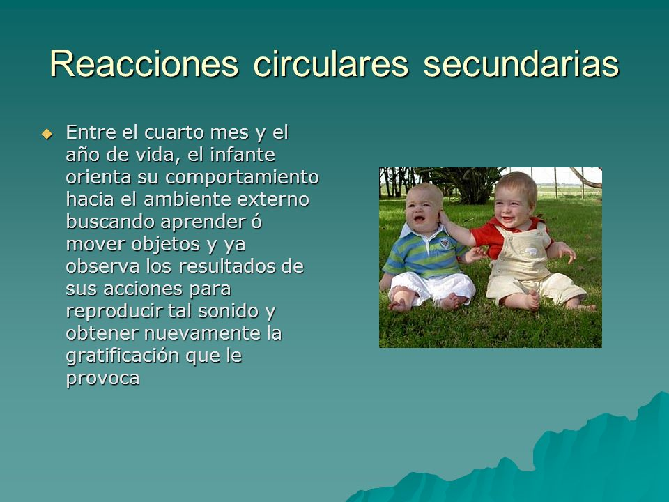 Reacciones circulares secundarias Entre el cuarto mes y el año de vida, el infante orienta su comportamiento hacia el ambiente externo buscando aprend