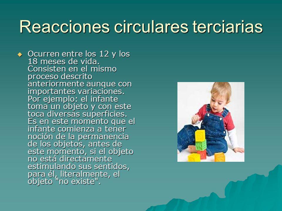Reacciones circulares terciarias Ocurren entre los 12 y los 18 meses de vida. Consisten en el mismo proceso descrito anteriormente aunque con importan