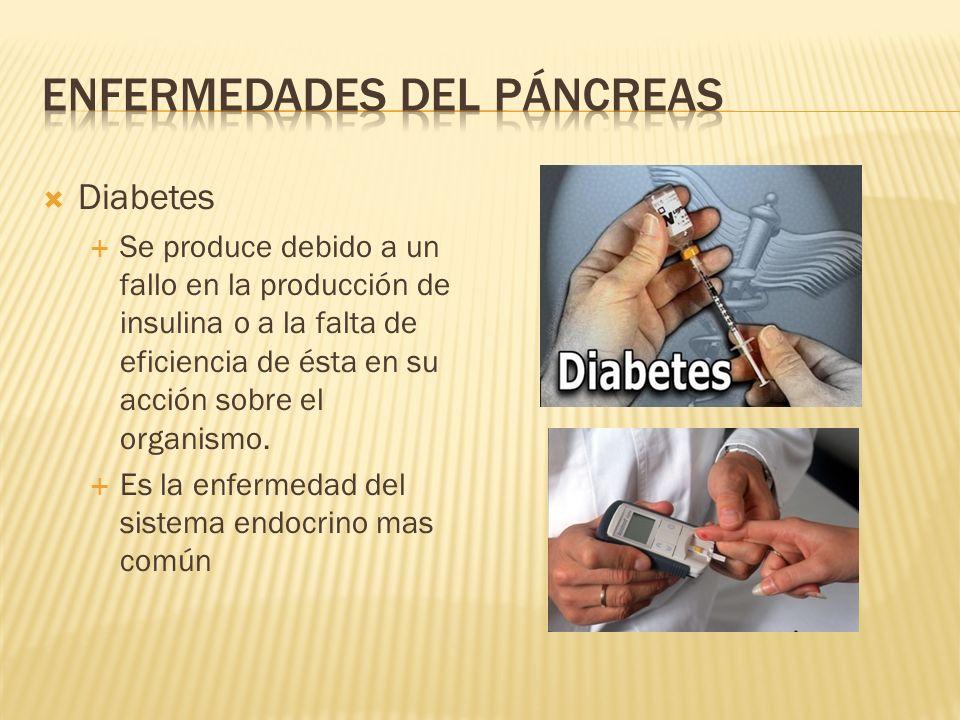 Diabetes Se produce debido a un fallo en la producción de insulina o a la falta de eficiencia de ésta en su acción sobre el organismo. Es la enfermeda