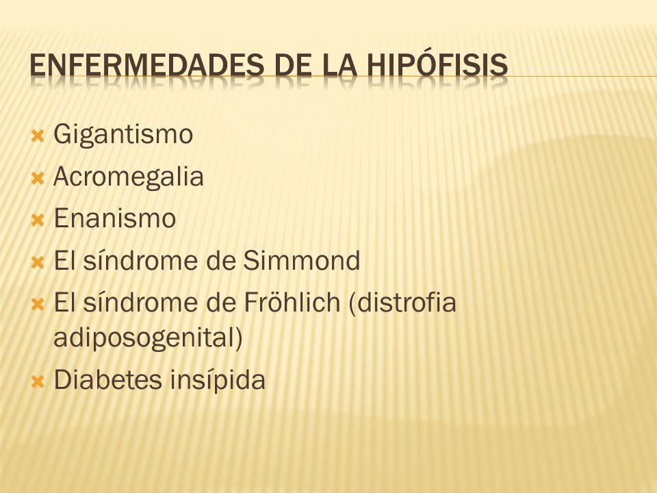 Gigantismo Acromegalia Enanismo El síndrome de Simmond El síndrome de Fröhlich (distrofia adiposogenital) Diabetes insípida