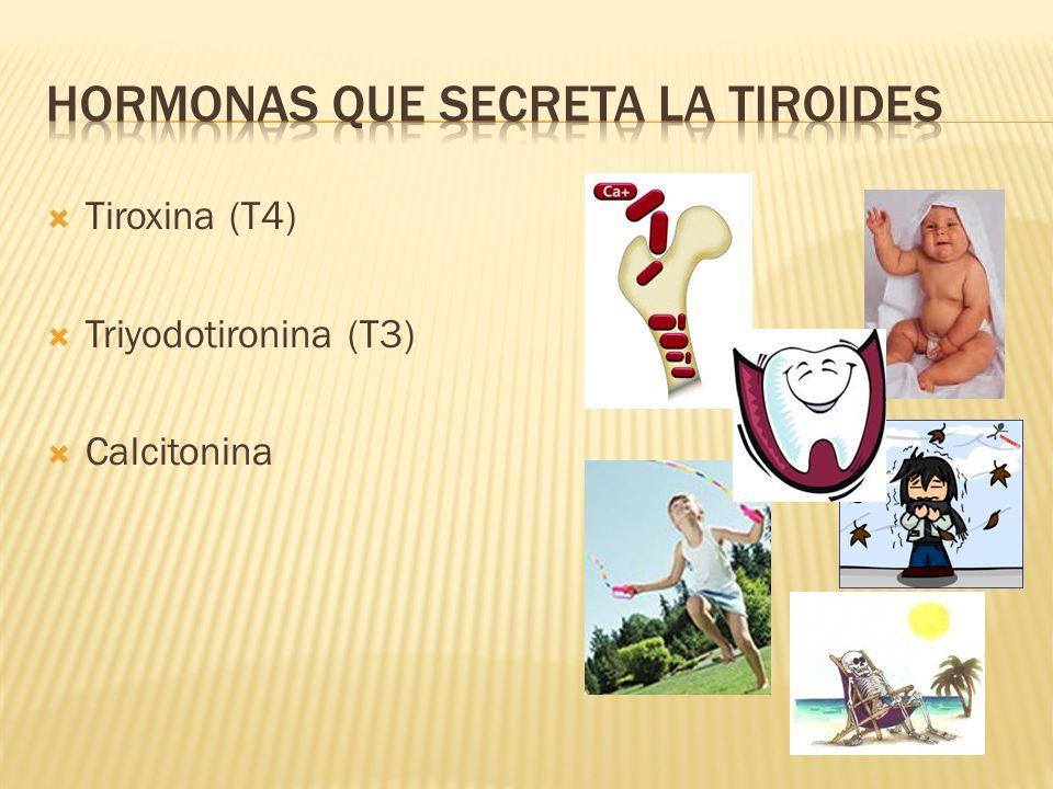 Tiroxina (T4) Triyodotironina (T3) Calcitonina