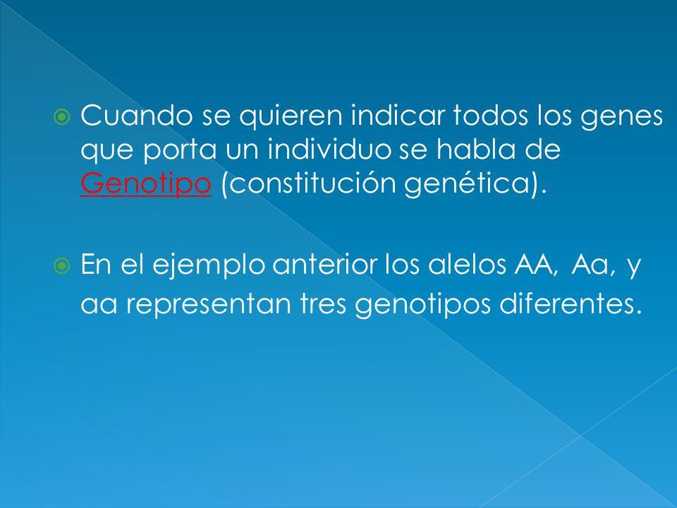 Cuando se quieren indicar todos los genes que porta un individuo se habla de Genotipo (constitución genética). En el ejemplo anterior los alelos AA, A