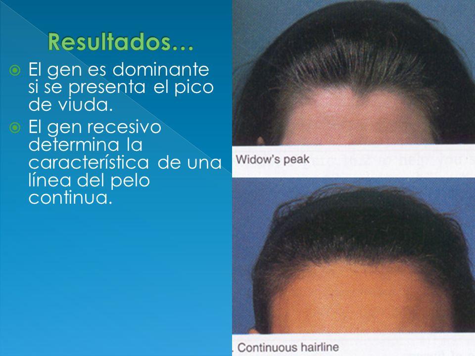 El gen es dominante si se presenta el pico de viuda. El gen recesivo determina la característica de una línea del pelo continua.