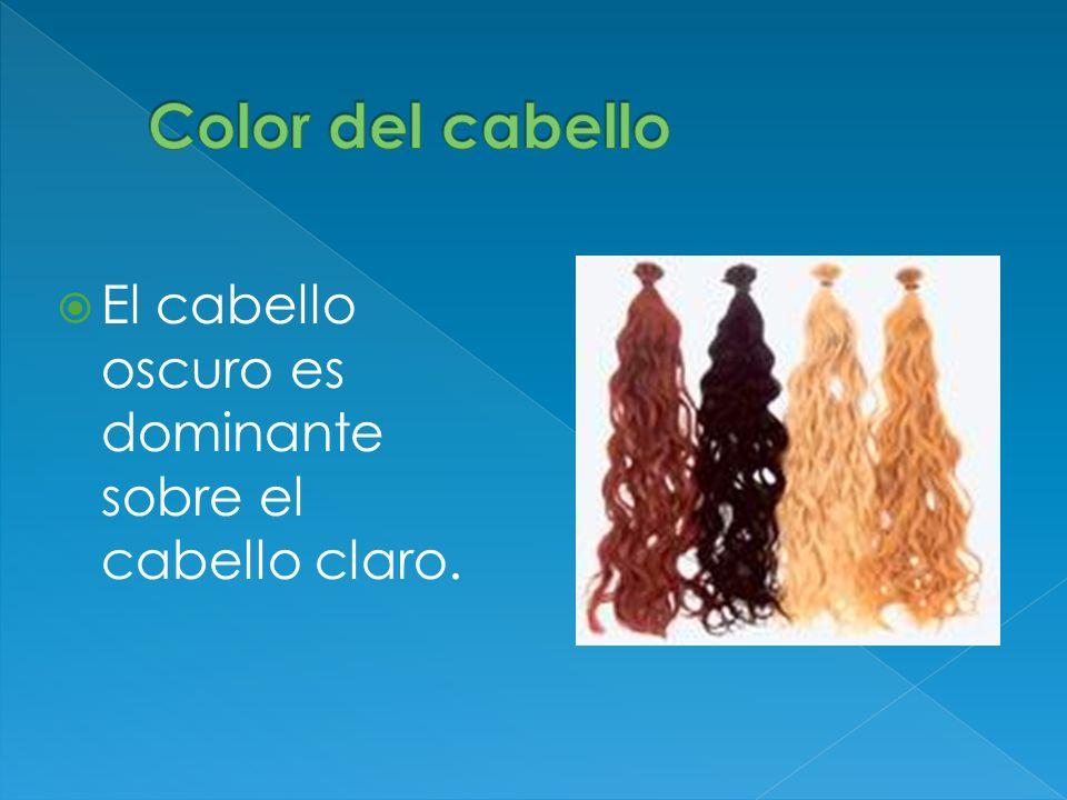 El cabello oscuro es dominante sobre el cabello claro.