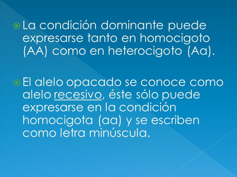 La condición dominante puede expresarse tanto en homocigoto (AA) como en heterocigoto (Aa). El alelo opacado se conoce como alelo recesivo, éste sólo
